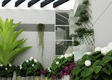 Bố trí cây xanh trong nhà theo phong thủy